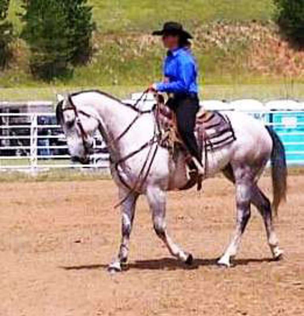 Riley shows a performance horse.