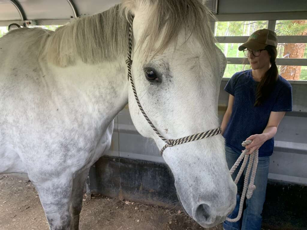 Horse trainer Emily Jacobs works to familiarize Beau the horse with getting into a trailer at the Pebble Creek Ranch on Monday, June 7. | Photo by Sawyer D'Argonne / sdargonne@summitdaily.com