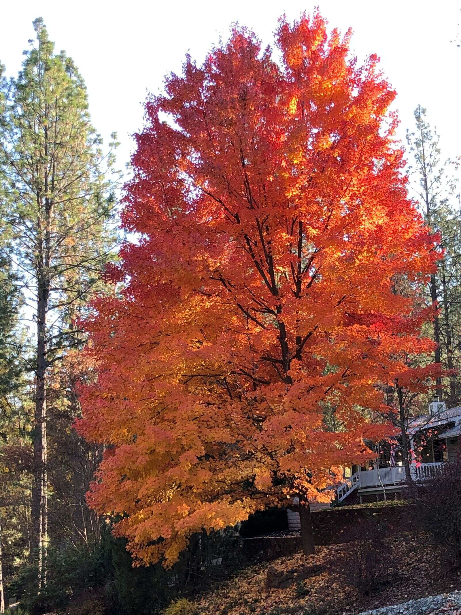 A few beautiful tree. | Submitted by Pam Kinzie