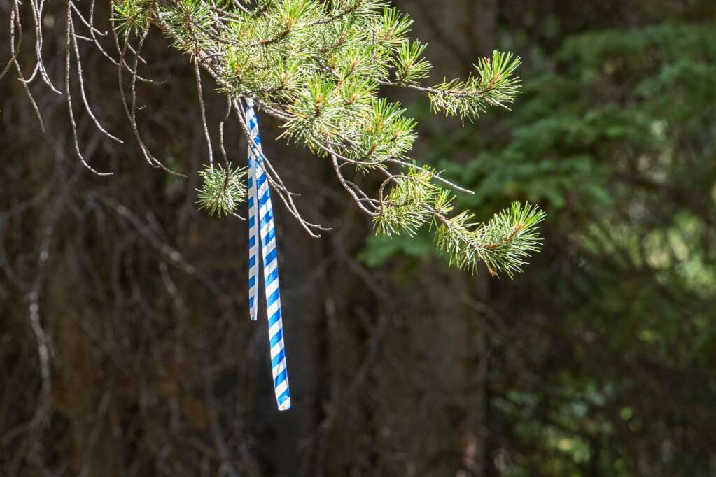 A blue and white ribbon marks the skier's left boundary of one of the proposed Pandora trails on Aspen Mountain on Thursday, August 12, 2021. (Kelsey Brunner/The Aspen Times)