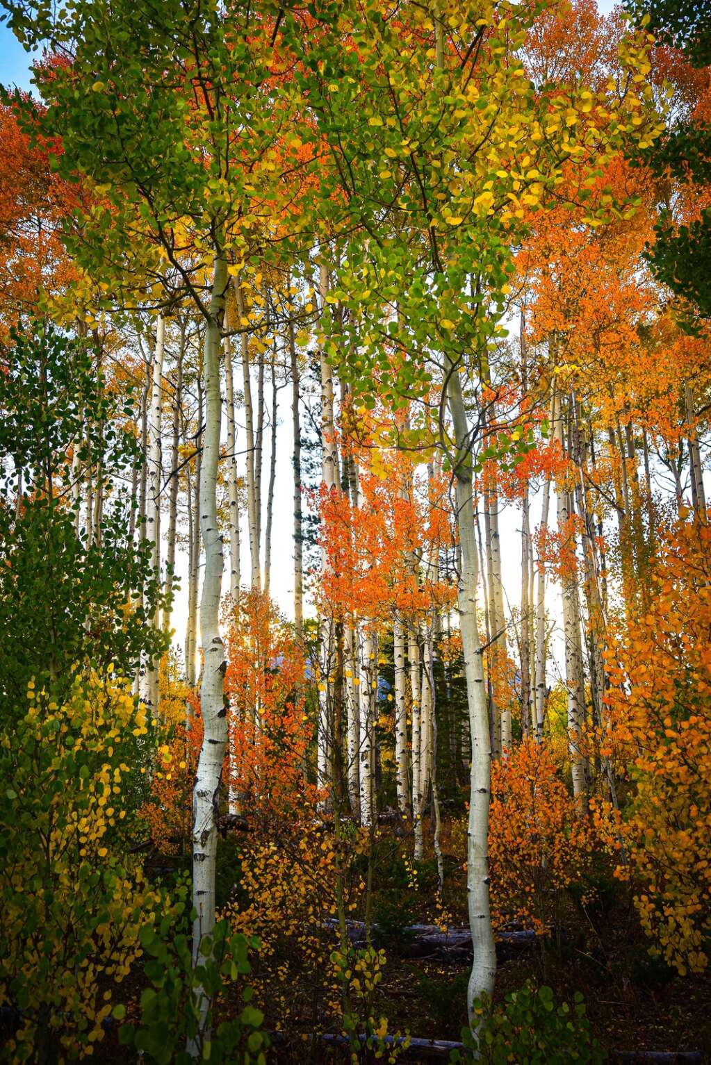 """""""All the Fall Colors"""" was captured on Salt Lick Trail in Breckenridge. Amy Marie Dlubac's work can be found at Red Buffalo Coffee & Tea and Timberline Craft Kitchen & Cocktails. 