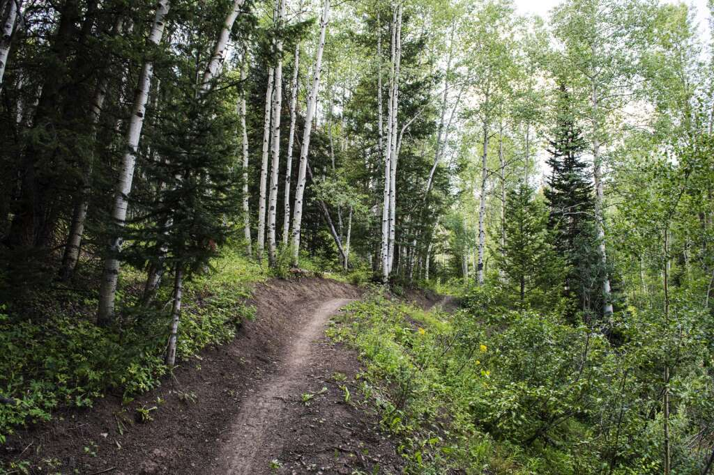 Dutch Creek Trail runs through aspen groves, around ponds and through small creek crossings in the Coal Basin Ranch community trail system on Thursday, July 29, 2021. (Kelsey Brunner/The Aspen Times)