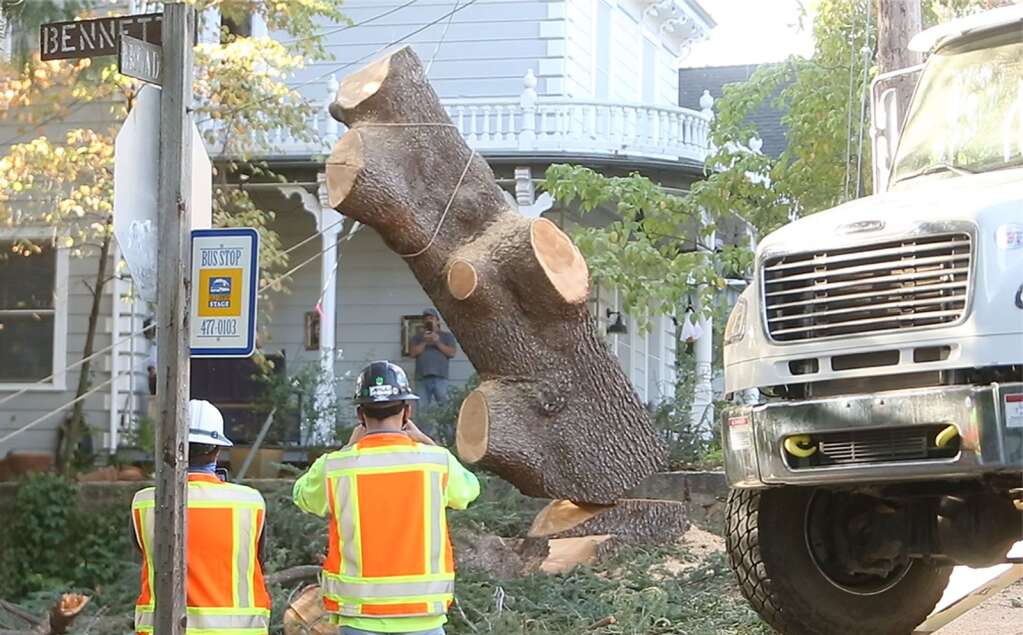 """Whats left of """"Bella"""" the beloved blue Atlas cedar, is cut and toppled by PG&E workers Oct. 22 at the corner of Bennet and Broad Streets in Nevada City. An arborist had determined that there was a cavity within the tree and that it was not worth saving. 