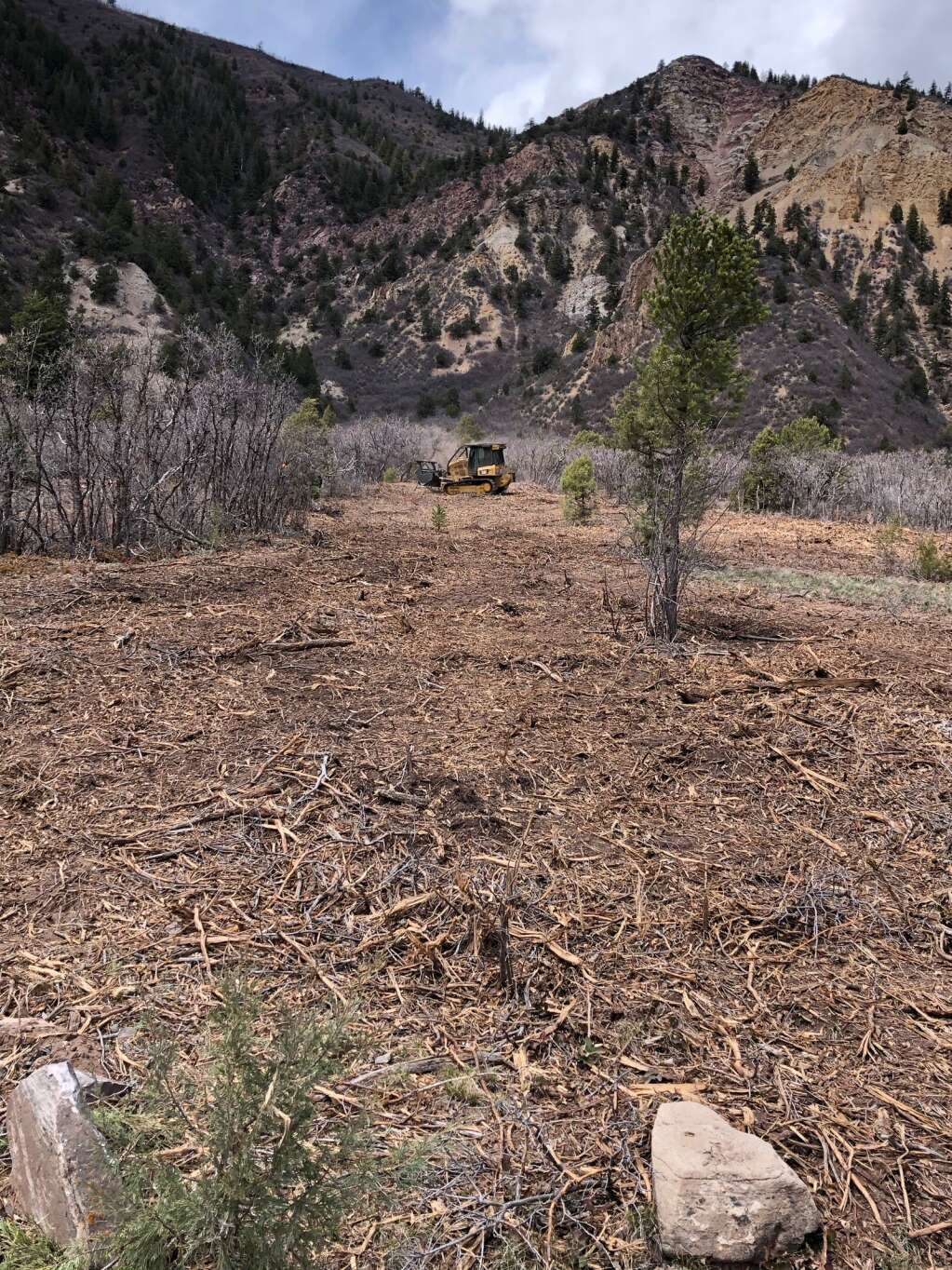 A fire mitigation project in the Crystal Valley created a mosaic of cleared area and islands of brush left untouched. | Scott Condon/The Aspen Times