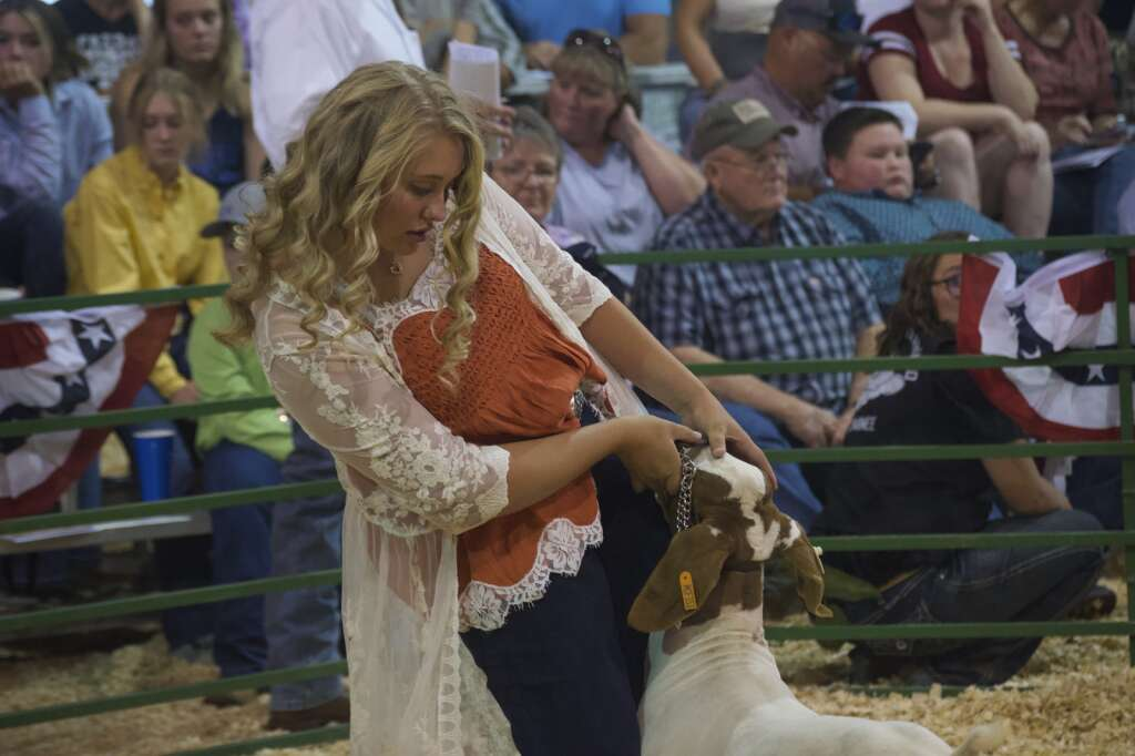 Trinity Boulger works with one of her award-winning goats while being recognized as both grand champion and reserve grand champion in goats at the Moffat County Fair livestock auction Saturday evening. | Cuyler Meade / Craig Press