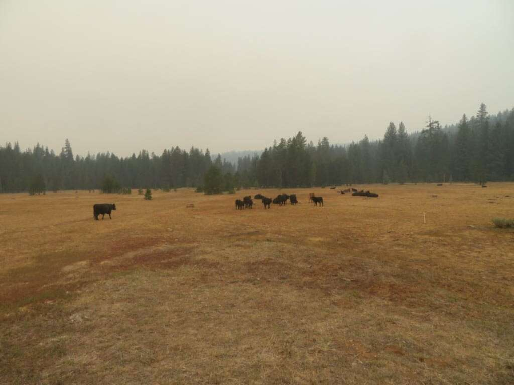"""It's pretty easy to get turned around in the haze. """"Found cattle on Barnes Flat. I was about to move them out but they seemed to think home was in another direction. Wally showed up and corrected my bearings . . . I think I was about to move them toward the fire."""" Photo by Richard Ross"""