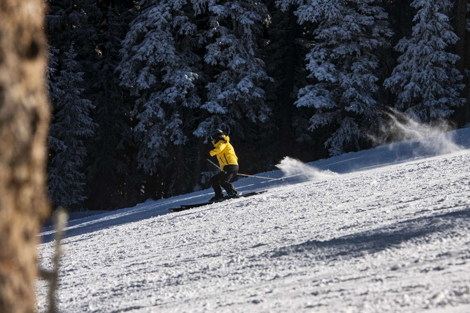 A skier carves in fresh snow on the opening day of Aspen Mountain on Wednesday, Nov. 25, 2020. (Kelsey Brunner/The Aspen Times)